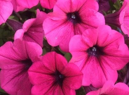 꽃그림222619.jpg