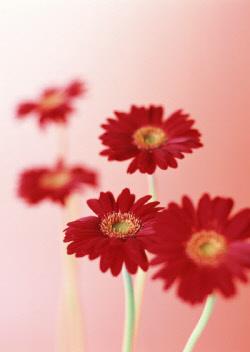 꽃그림Gmk.jpg